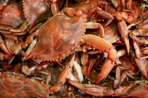 Seafood Myths