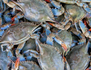 Best Steamed Maryland Blue Crabs In Baltimore