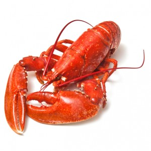 Let's Learn More About Lobsters!