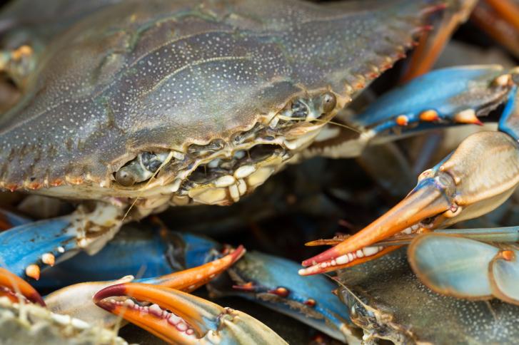 summer costas inn baltimore blue crabs