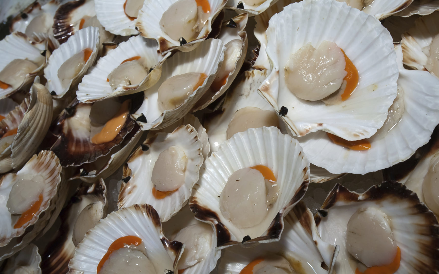 What 39 S The Difference Between Bay And Sea Scallops